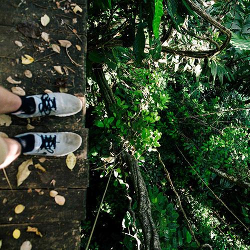 aventura en árboles